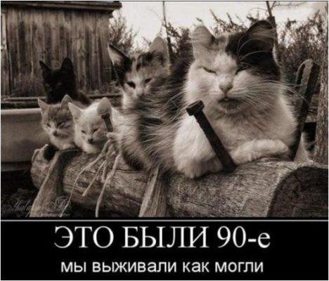 животными