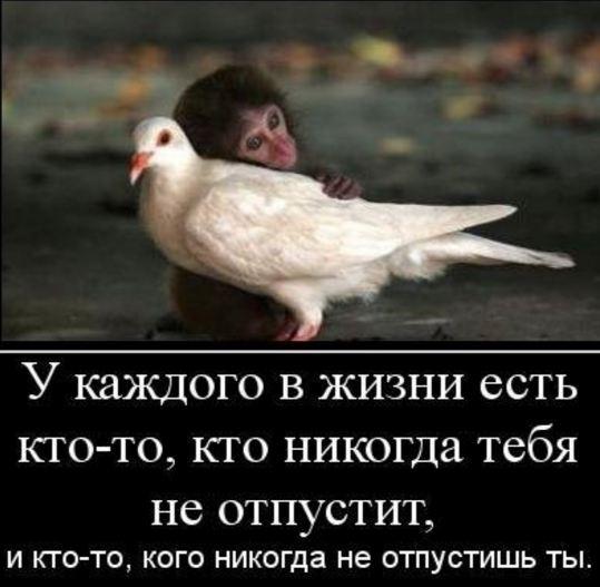 картинка со смыслом жизни без слов