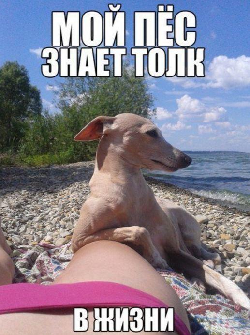 смешные картинки с животными 11