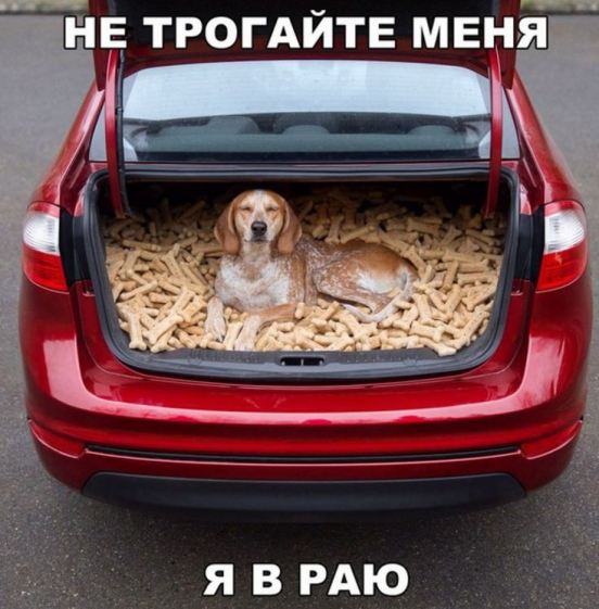 юмористическая галерея фоток