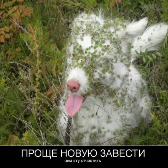 фото приколы смешные новые