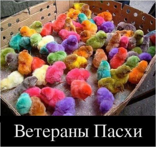 фото приколов