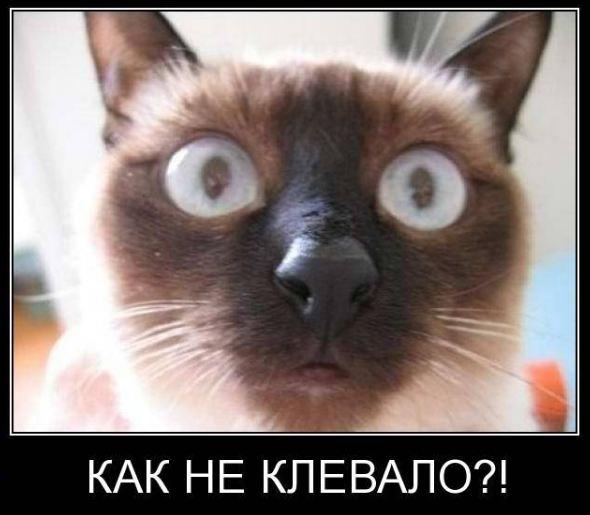 фото приколы с кошками