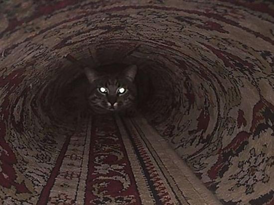 смешные картинки котов и кошек