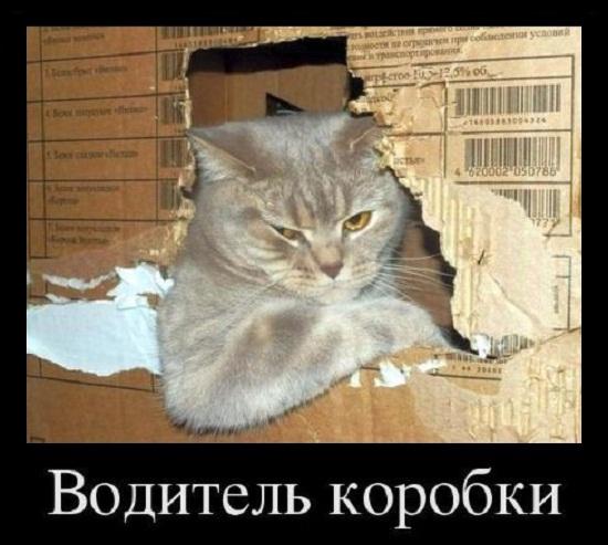 прикольные картинки котов и кошек