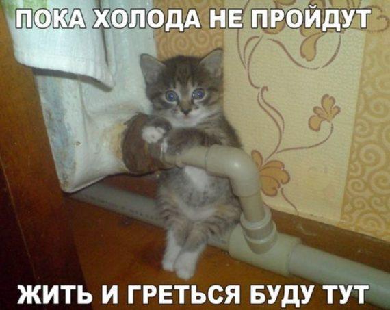 смешные картинки кошек и собак