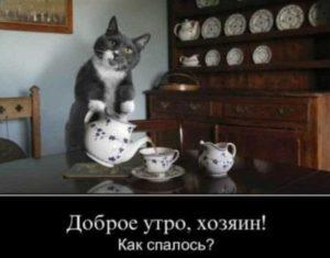 анекдоты картинки месяца про котов прнптикз