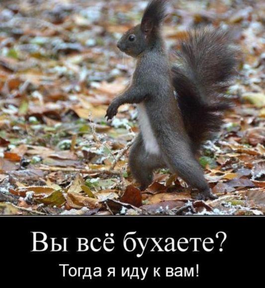 фоткипро