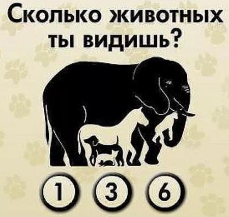 Картинка со слоном сколько животных, картинки сдавайся