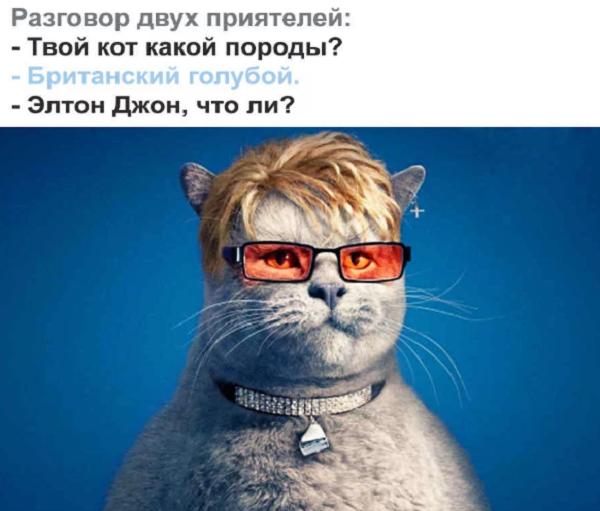 ржачный прикол про кошек ком