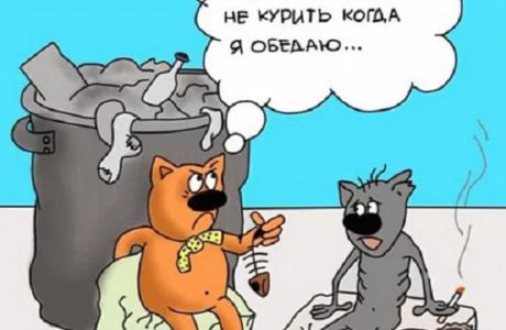 смешной анекдот про котов ком