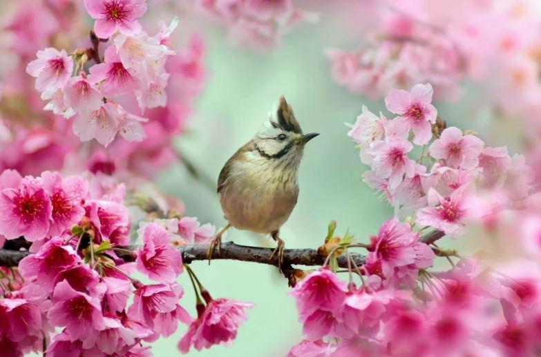 картинки про весну ком (10)
