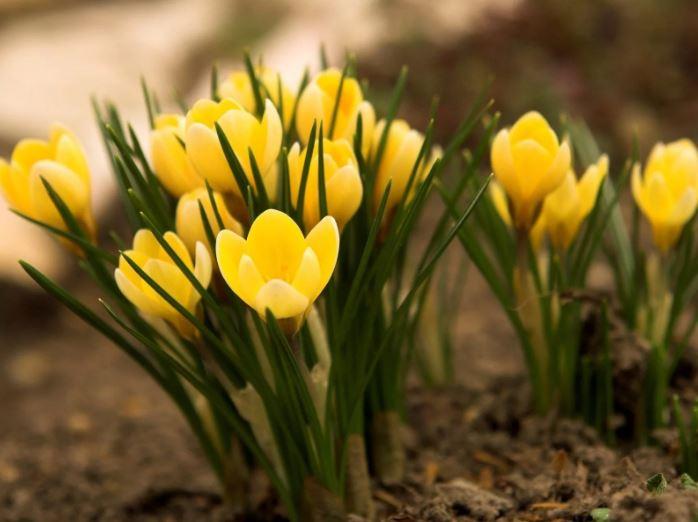 картинки про весну ком (14)