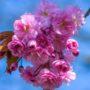 Картинки про весну: красивые фото цветов, природы