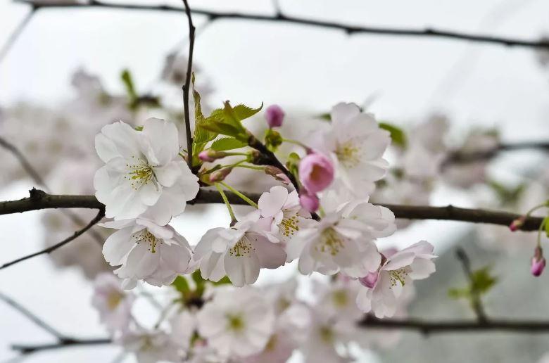 картинки про весну ком (2)
