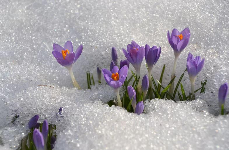 картинки про весну ком (3)