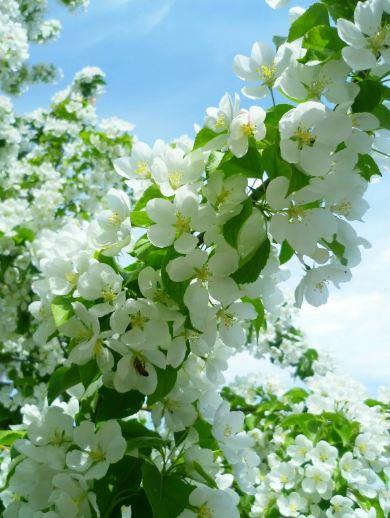 картинки про весну ком (4)