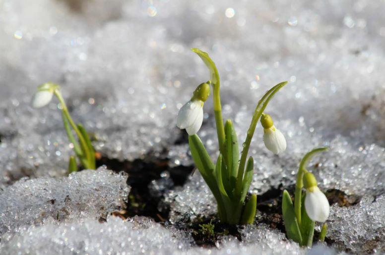 картинки про весну ком (5)