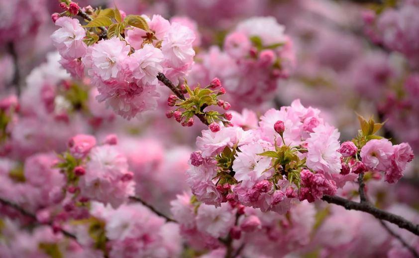картинки про весну ком (7)