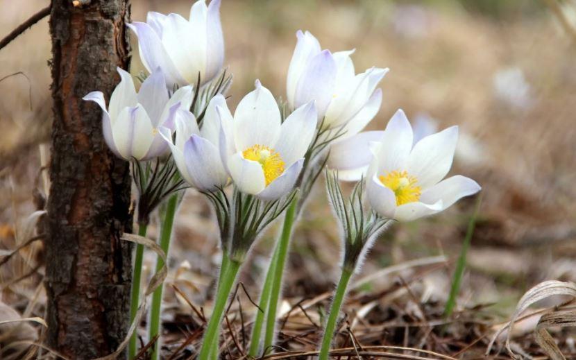 картинки про весну ком (8)