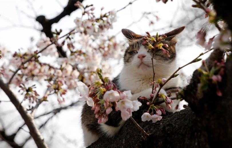 картинки про весну ком (9)