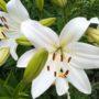 Красивые фотографии летней природы и цветов